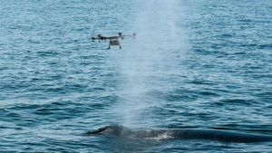 drones_whale_research